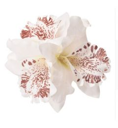 White Orchid Fabric Bridal, Bridesmaid Hair Flower, Clip, Broach