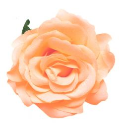 "Peach Rose Hair Flower, Broach, Clip ""Polyantha"""